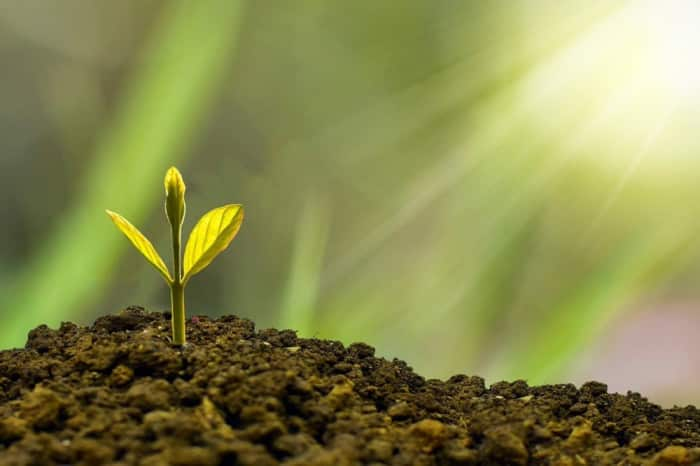 A plant growing to symbolize ESG investing