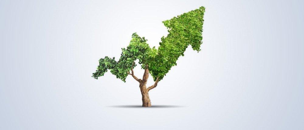 A tree shaped into a rising trajectory