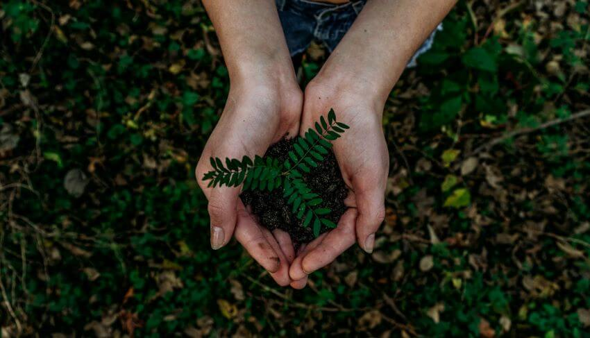 Plant in Hand | Sustainability