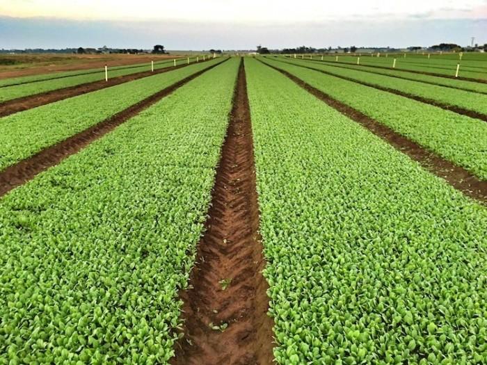 Salad Farm for Sustainability